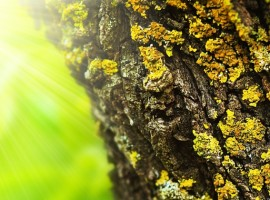 Spring forest abstract background